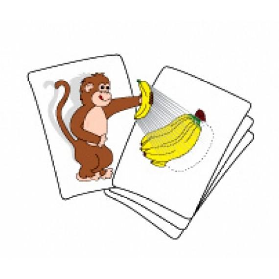 scimmietta famelica